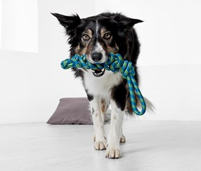 Dog Playing Rope, Blue/Green