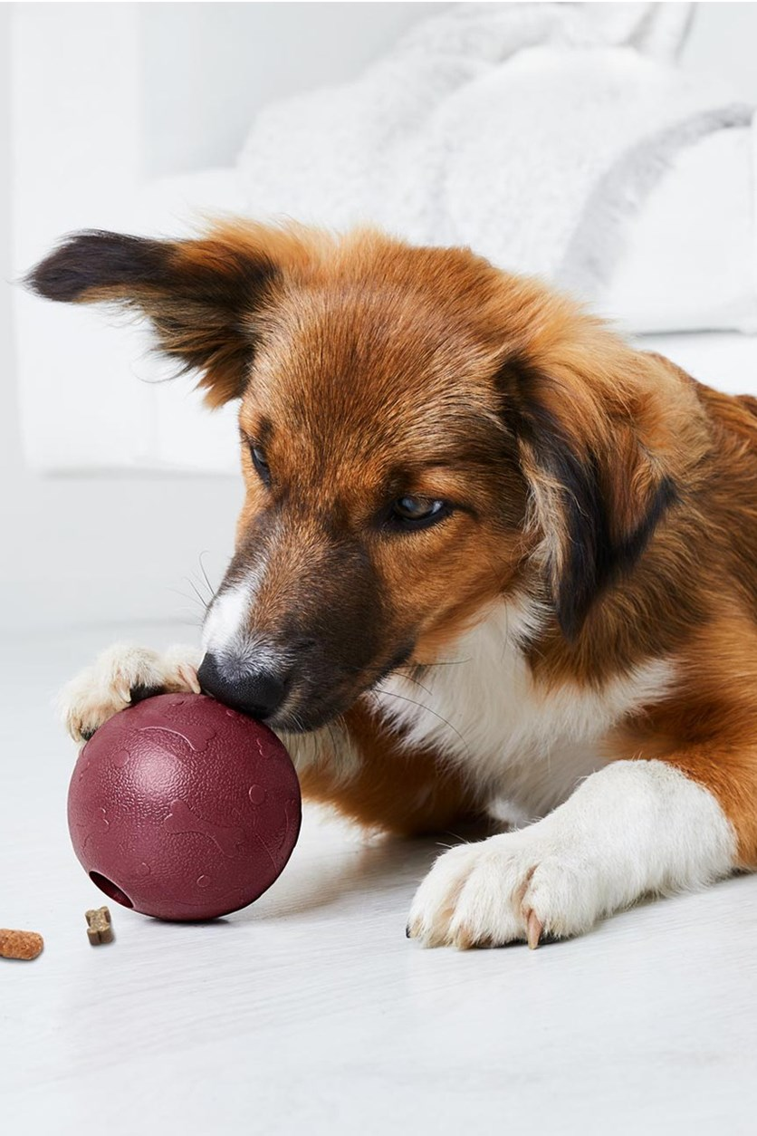 Dog Snackball, Maroon