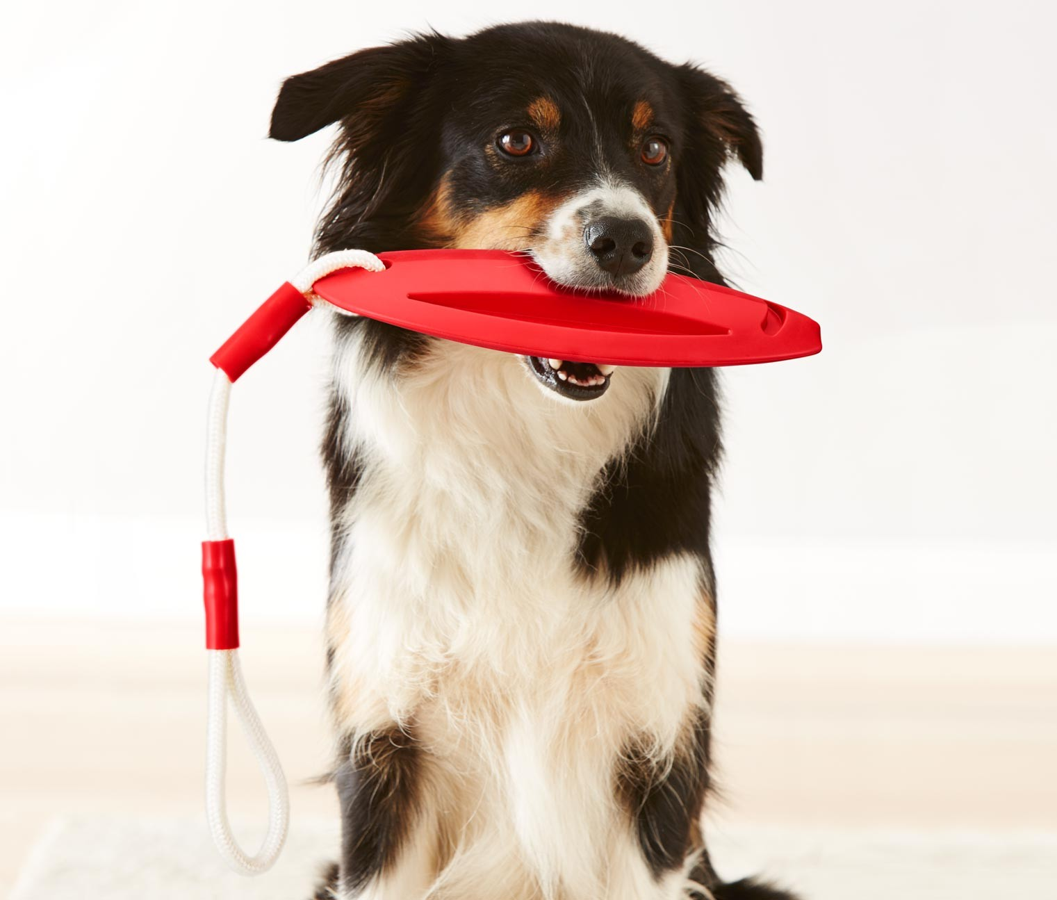 Dog Toy, Red