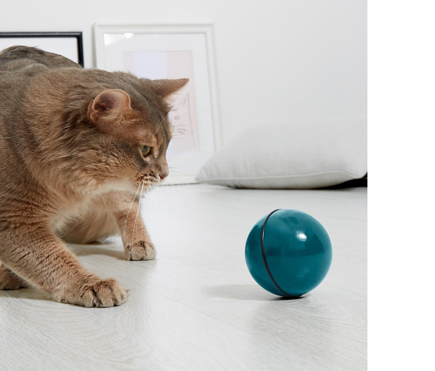 Random Moving Ball Cat Toy, Teal