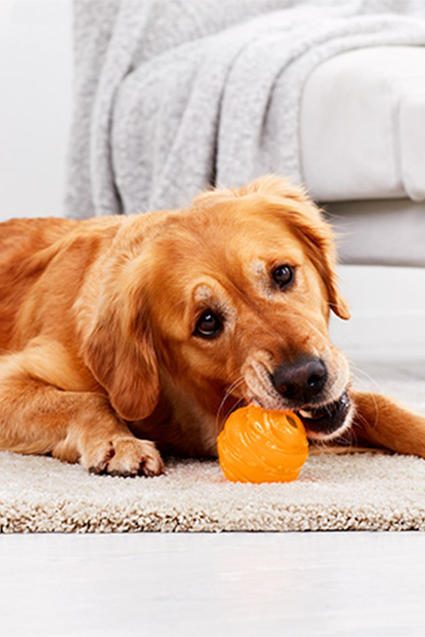 Dog Ball, Orange