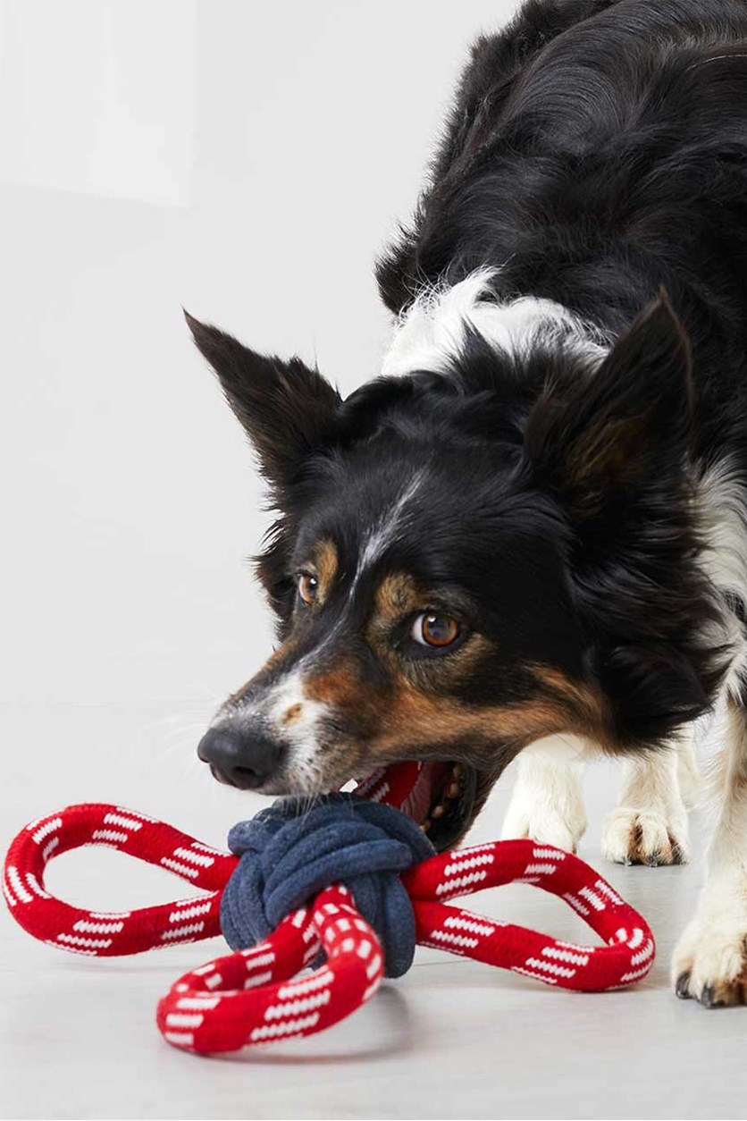Dogs Toy Rope, Red/Navy