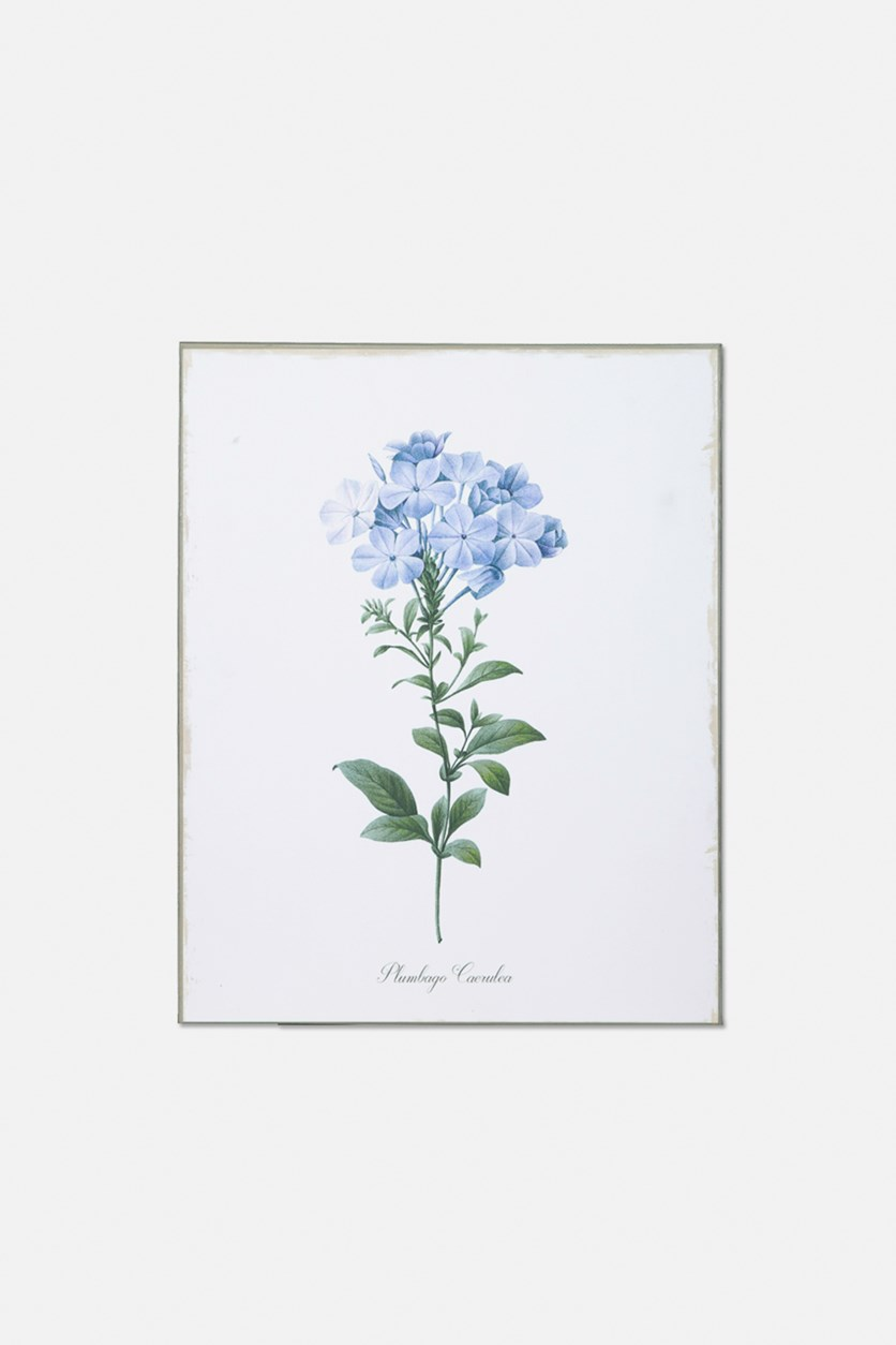 Floral Plumbago Caerulea Botanical Art, White/Green/Blue
