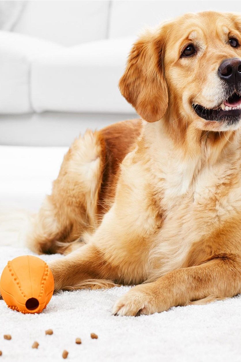 Dog Snack Toys, Orange