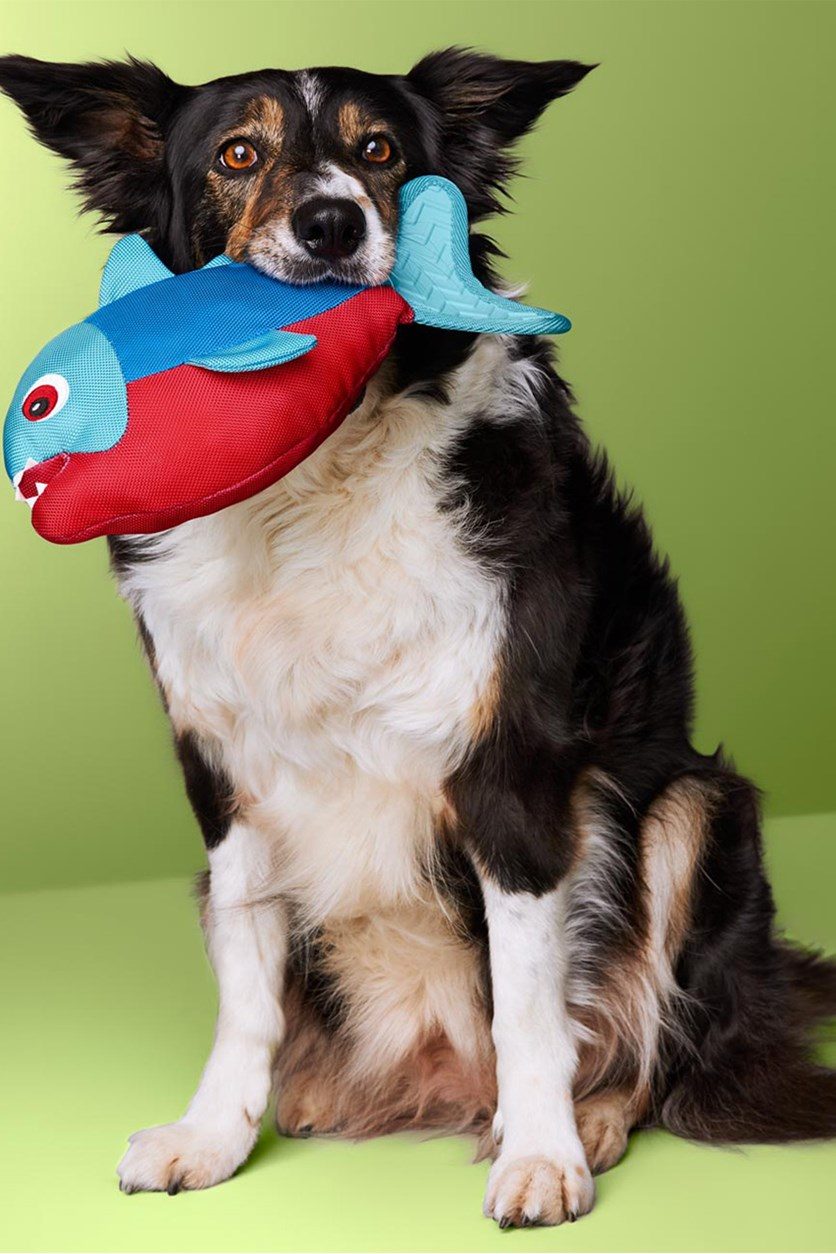 Dog Toy, Blue