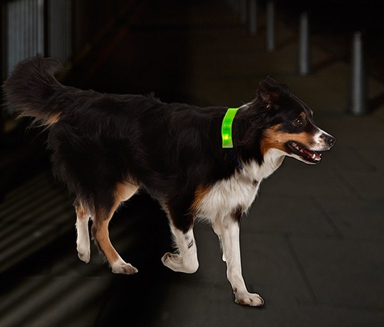 Dog Collar, LED, Yellow Green