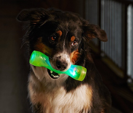 Dog Led Throwing Stick, Lime Green