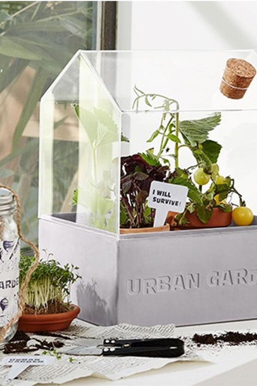 Mini-Greenhouse, Transparent