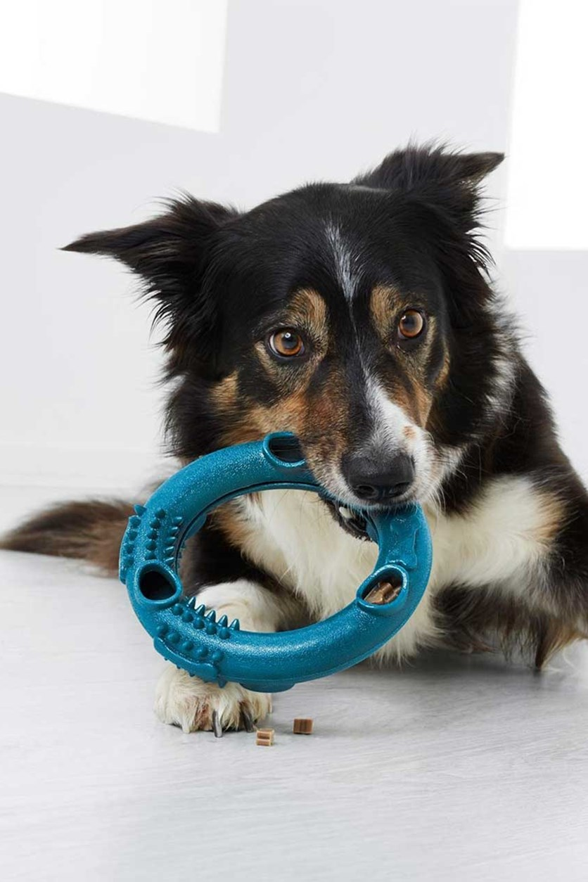 Dog Snack Toy, Teal