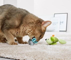 Cat Toothcare Toy, Grey/Green