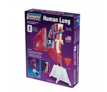 Lindberg Human Lung, Purple