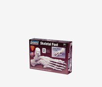 Lindberg Skeletal Foot Model Kit